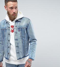 Светлая джинсовая куртка Levis - Синий Levis®