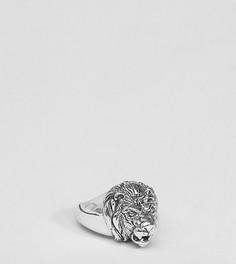 Серебряное кольцо с головой льва ASOS PLUS - Серебряный