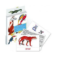 """Дидактические карточки """"Животные Южной Америки"""" Маленький гений"""
