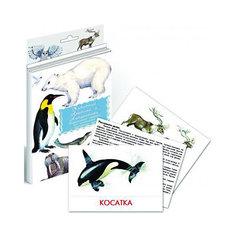 """Дидактические карточки """"Животные Арктики и Антарктики"""" Маленький гений"""