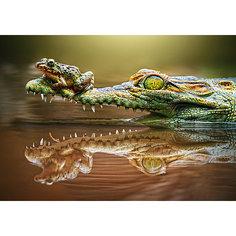 """Пазл """"Крокодил"""", 500 деталей, Castorland"""