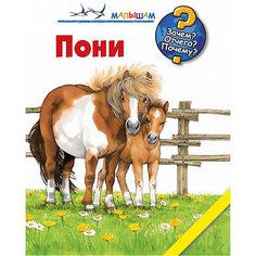 Пони Малыш