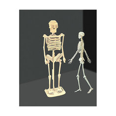 Скелет человека, Мир деревянных игрушек МДИ