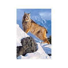 """Пазл """"Рысь в горах"""", 1000 деталей, Castorland"""