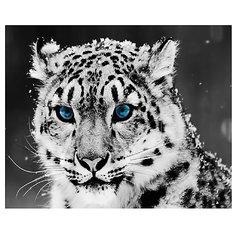 "Картина по номерам ""Снежный барс"", 40*50 см Molly"