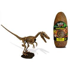 Яйцо динозавра - сборная модель Велоцираптора, Geoworld
