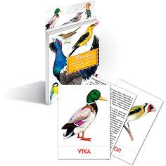 """Дидактические карточки """"Птицы наших лесов"""", Маленький гений"""