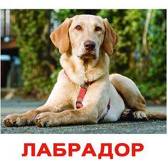 """Набор обучающих карточек Вундеркинд с пелёнок """"Породы собак"""" 20 штук"""
