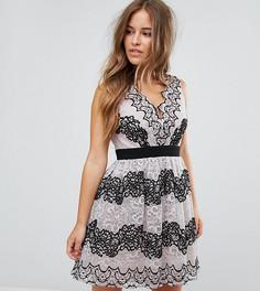 Платье мини для выпускного с кружевной аппликацией Little Mistress Petite - Мульти