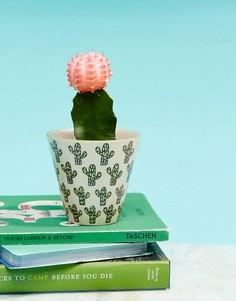Небольшой горшок для растений с принтом кактуса Sass & Belle - Мульти