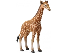 Фигурка Collecta «Детеныш сетчатого жирафа» 13 см
