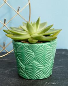 Горшок для растений с тисненым узором в виде листьев Sass & Belle - Мульти