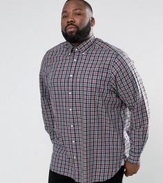 Серая рубашка классического кроя в клетку с воротником на пуговицах Tommy Hilfiger PLUS - Серый