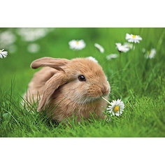 Пазл «Кролик в ромашках» XXL 150 шт # Ravensburger