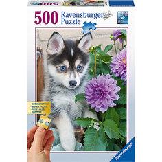Пазл «Маленький хаски» 500 шт Ravensburger
