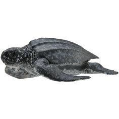 Кожистая черепаха (M), Collecta