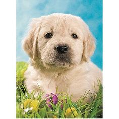 Пазл «Милый щенок» XXL 100 шт Ravensburger