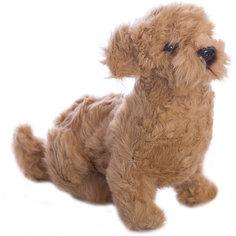 Филиппинская собака, 30 см, Hansa