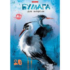 Erich Krause Альбом для рисования с акварельной бумагой А4 20 листов Птицы жарких стран