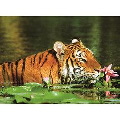 Пазл «Тигр в лилиях» 500 шт Ravensburger
