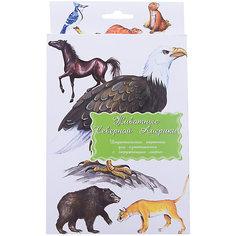 """Дидактические карточки """"Животные Северной Америки"""" Маленький гений"""