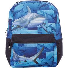 "Рюкзак ""Sharks"", цвет (черный/мульти) Mojo PAX"