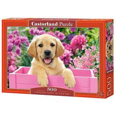 "Пазл Castorland ""Щенок в коробке"" 500 деталей"
