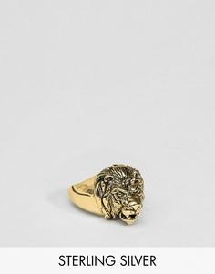 Серебряное кольцо с головой льва с золотым покрытием ASOS DESIGN - Золотой