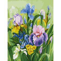 Картина по номерам Белоснежка «Нежные ирисы», 30x40 см