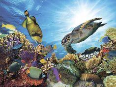 Картина на стекле Экорамка Коралловый риф 40x30 см, Стекло