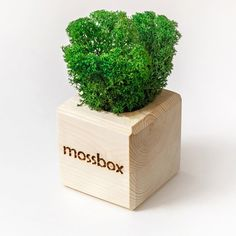 Предмет интерьера Эйфорд MossBox Wooden Green Cube, MSBX-02-01