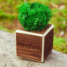 Предмет интерьера Эйфорд MossBox Fire Green Cube, MSBX-03-01