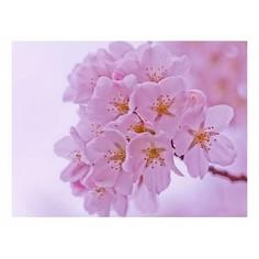 Картина (40х30 см) Маленькие розовые цветы на ветке HE-101-698 Ekoramka
