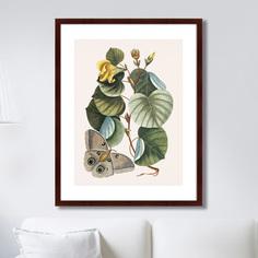 Литография Beauty bloom №3, 1732г,, 78,5х100см, Картины в Квартиру