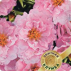 Семена Портулак махровый Розовая дымка, 0,01 г Элитная клумба Гавриш