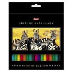 Hatber цветные карандаши Дикий мир, 24 цвета (BKc_24270)