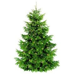 Украшение декоративное BONDIBON Самая компактная елка (ВВ2052), зеленый