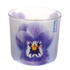 Свеча в стакане Bolsius ароматическая 76/78 мм lavanda
