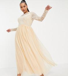 Платье макси с отделкой на лифе и юбкой изтюля ASOS DESIGN Curve-Розовый цвет