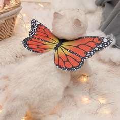 Костюм для домашних животных в форме бабочки Shein