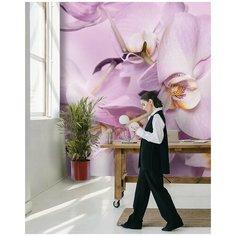 Фотообои флизелиновые Flizetto MATRIX Нежная орхидея 200х270 см Fbrush