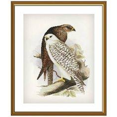 """Набор для вышивания """"Новая Слобода"""" Гордые птицы 28х36 см. Nova Sloboda"""